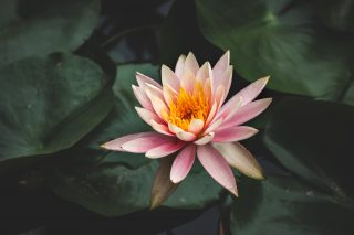 wildflower health and wellness, massage, physiotherapy, osteopathy